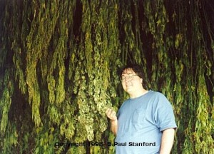Paul Stanford trip to Switzerland 1998 - 3
